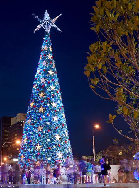 MailOnline Travel reveals the best Christmas trees in the