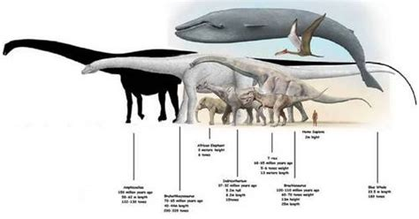 Bruhathkayosaurus Pictures & Facts - The Dinosaur Database