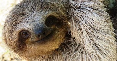 Sloth Encounter & Cultural Towns Half Day Trip From San