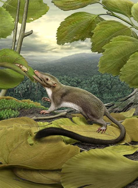 Common Ancestor of Placental Mammals Plucked From