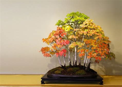30+ Of The Most Beautiful Bonsai Trees Ever