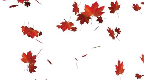 Falling Autumn Leaves + Alpha Channel - YouTube