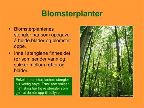 PPT - Blomsterplanter PowerPoint Presentation - ID:4036091