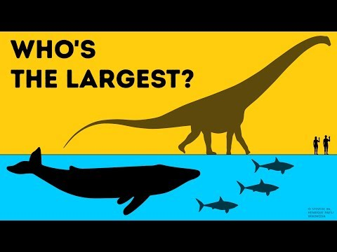 Rhoetosaurus Pictures & Facts - The Dinosaur Database