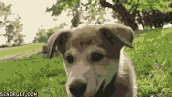 Frolicking GIFs - Find & Share on GIPHY