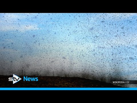How to protect yourself against midges this summer