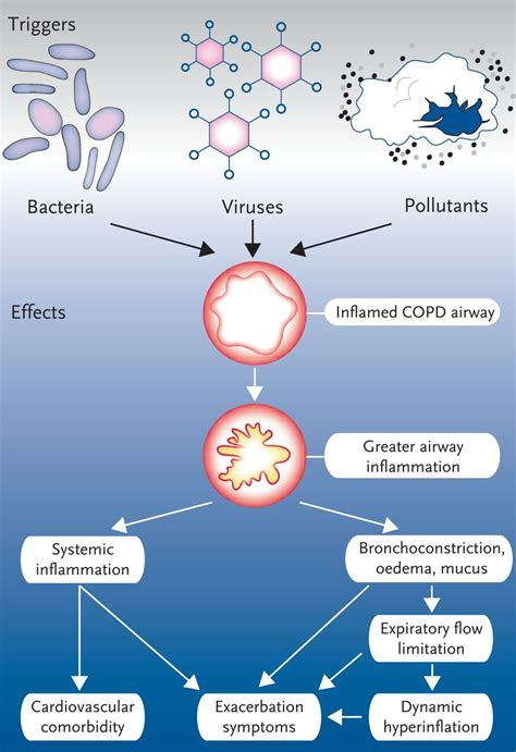 COPD exacerbations: impact and prevention   European